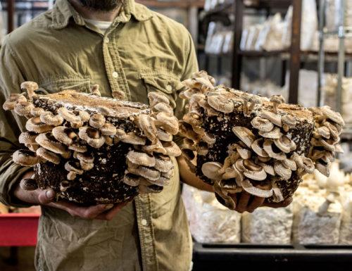 Philadelphia's Secret Underground Mushroom Farm