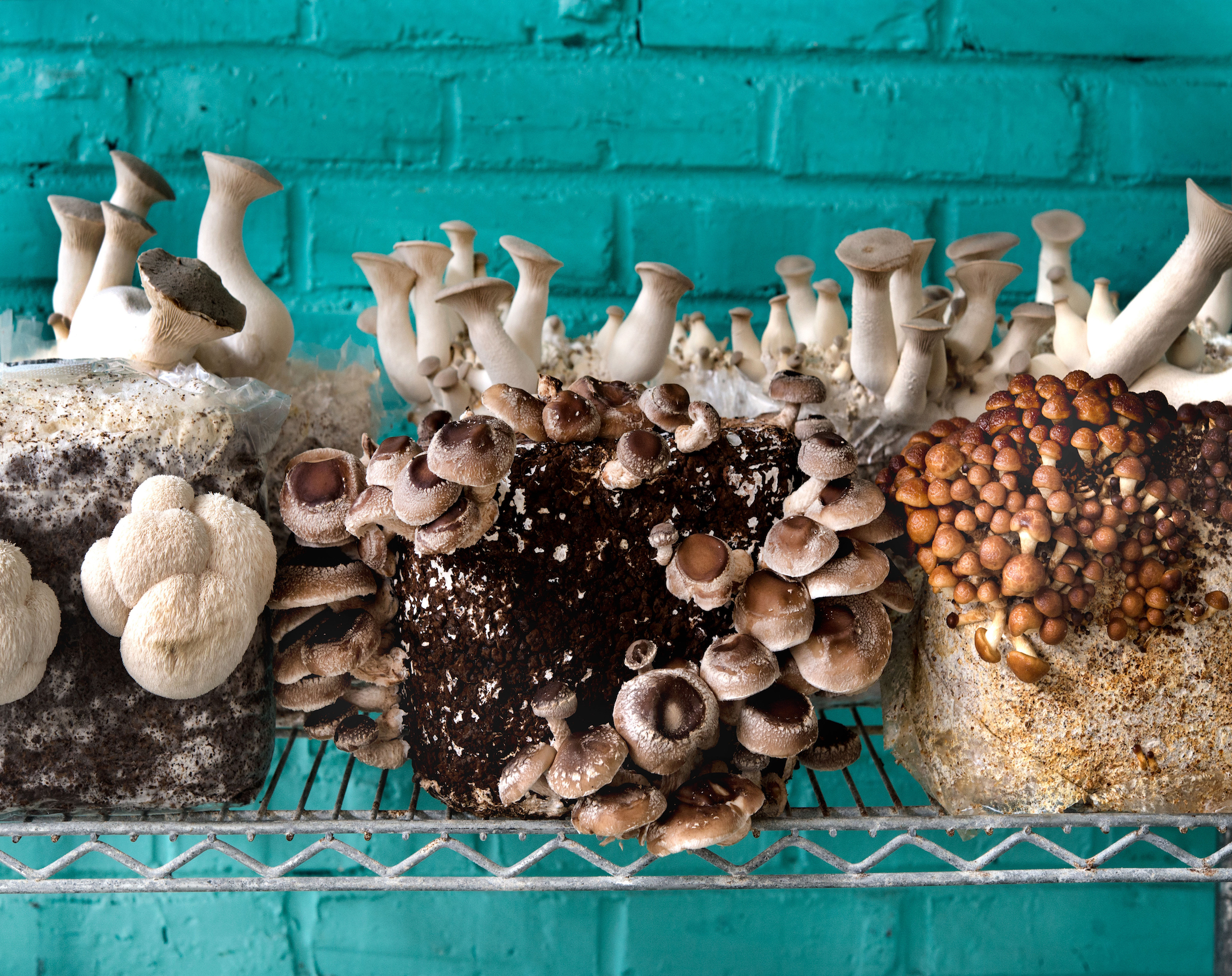 the basement farm in north philadelphia grows mushrooms for many of