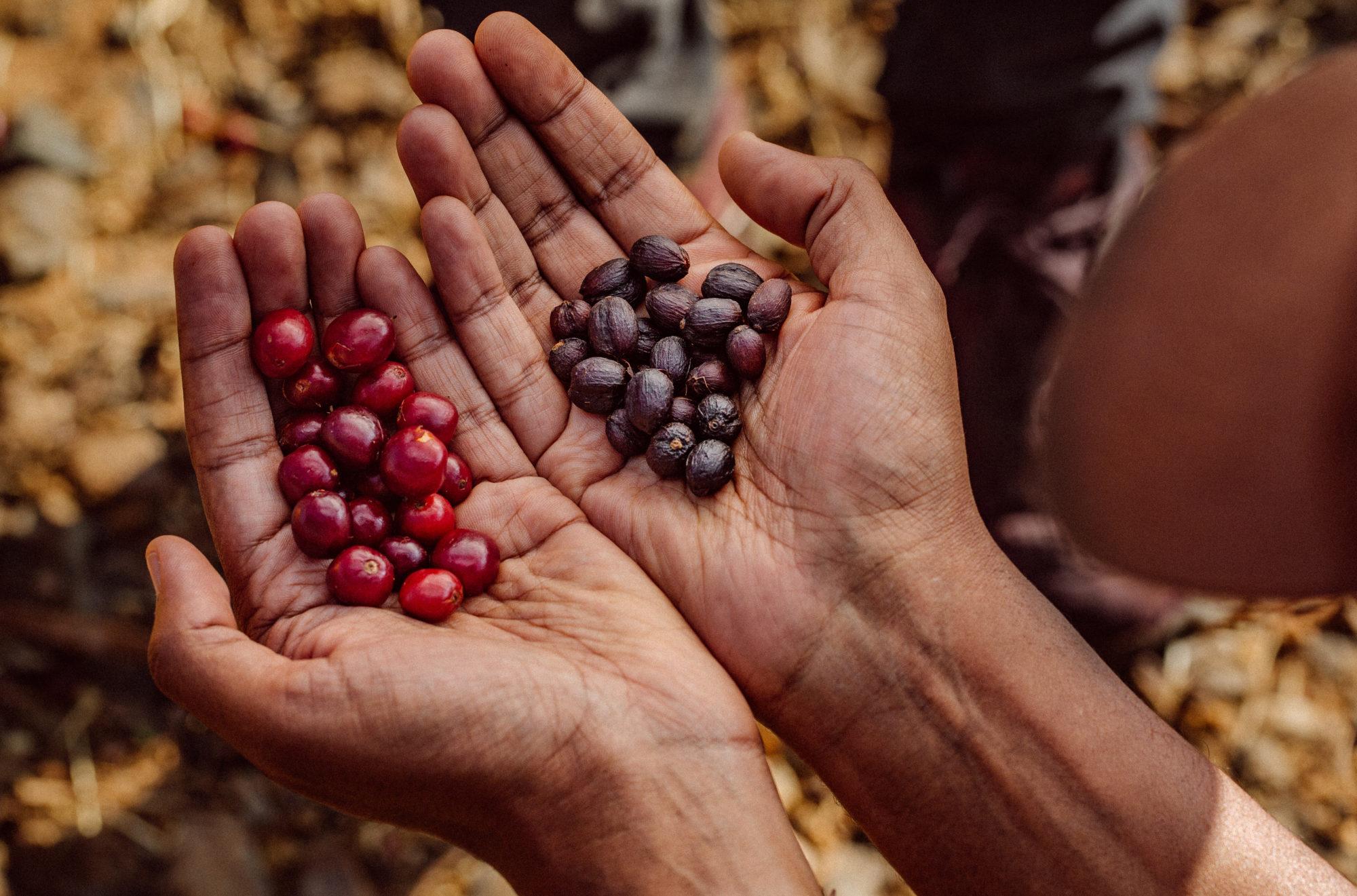 Taste-Ethiopia-by-@eyalyassky-1252