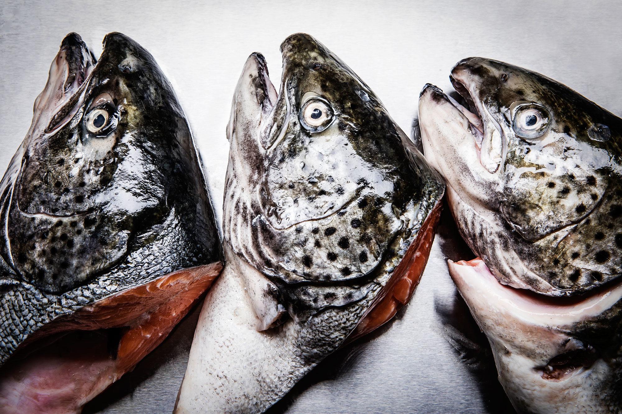 Article-Fish-Head-Recipe