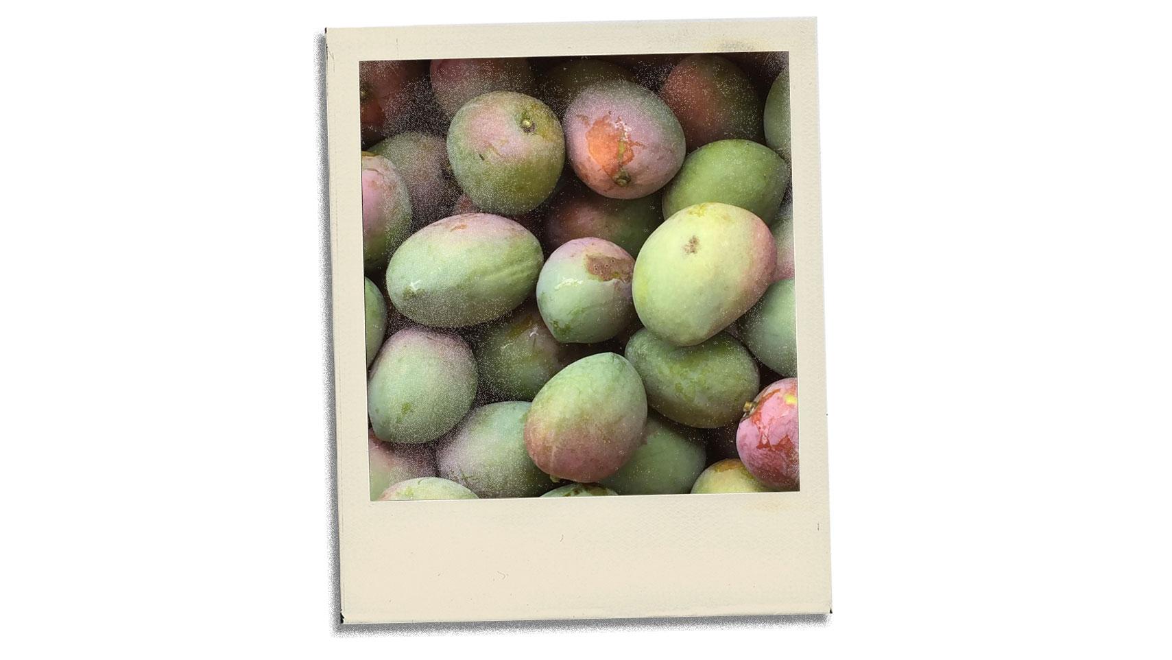 Article-Postcard-From-Deli-Mango-Season